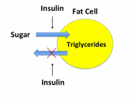 insulin traps fat